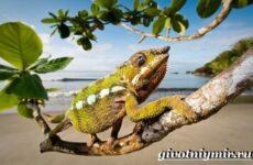 Животные Мадагаскара. Описание и особенности животных Мадагаскара