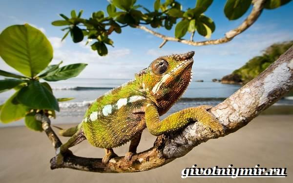 Животные-Мадагаскара-Описание-и-особенности-животных-Мадагаскара-2