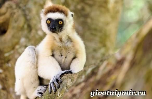 Животные-Мадагаскара-Описание-и-особенности-животных-Мадагаскара-3