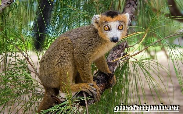 Животные-Мадагаскара-Описание-и-особенности-животных-Мадагаскара-4