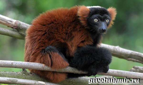 Животные-Мадагаскара-Описание-и-особенности-животных-Мадагаскара-5