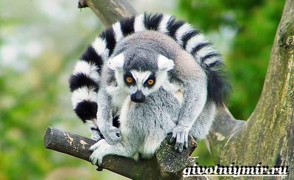 Животные-Мадагаскара-Описание-и-особенности-животных-Мадагаскара-6