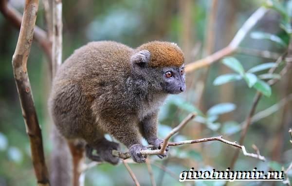 Животные-Мадагаскара-Описание-и-особенности-животных-Мадагаскара-7