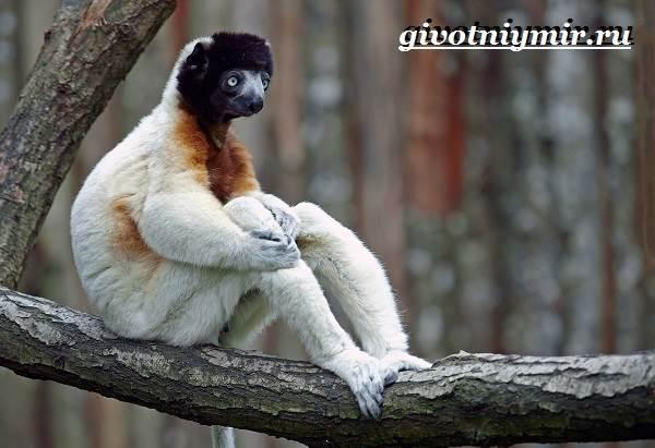 Животные-Мадагаскара-Описание-и-особенности-животных-Мадагаскара-8