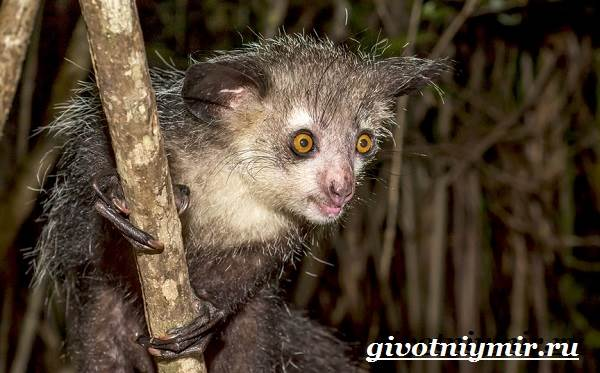 Животные-Мадагаскара-Описание-и-особенности-животных-Мадагаскара-9