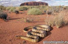 Животные пустыни. Описания, названия, особенности и фото животных пустыни