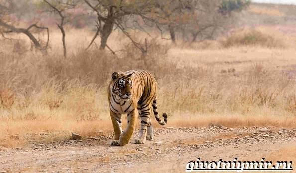 Животные-пустыни-Описания-названия-особенности-и-фото-животных-пустыни-11