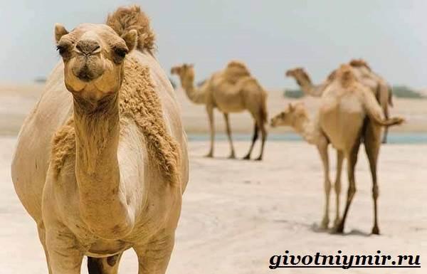 Животные-пустыни-Описания-названия-особенности-и-фото-животных-пустыни-12