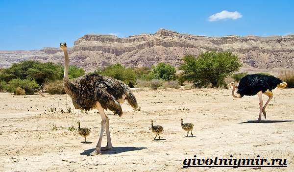 Животные-пустыни-Описания-названия-особенности-и-фото-животных-пустыни-18