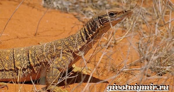 Животные-пустыни-Описания-названия-особенности-и-фото-животных-пустыни-19