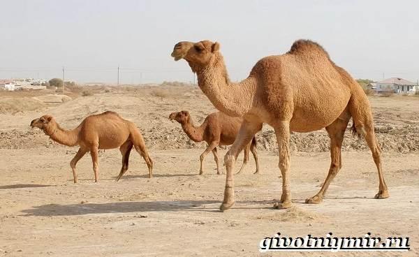 Животные-пустыни-Описания-названия-особенности-и-фото-животных-пустыни-2