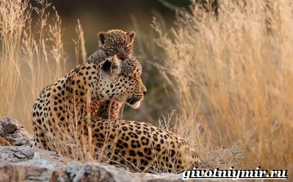 Животные-пустыни-Описания-названия-особенности-и-фото-животных-пустыни-21
