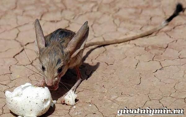Животные-пустыни-Описания-названия-особенности-и-фото-животных-пустыни-22