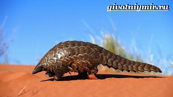 Животные-пустыни-Описания-названия-особенности-и-фото-животных-пустыни-25