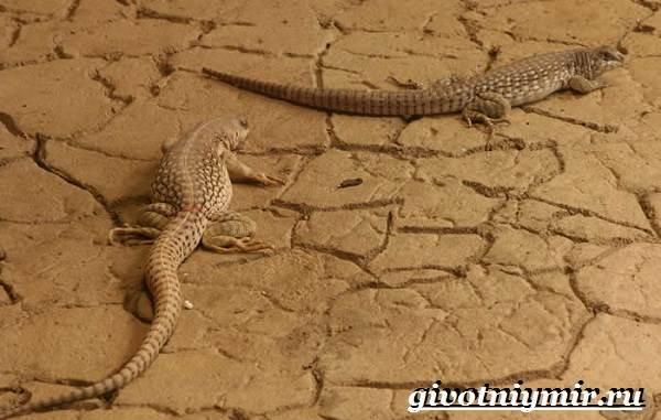Животные-пустыни-Описания-названия-особенности-и-фото-животных-пустыни-3