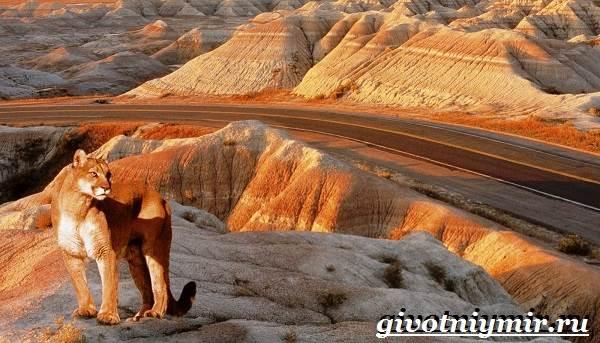 Животные-пустыни-Описания-названия-особенности-и-фото-животных-пустыни-4
