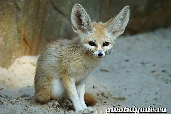 Животные-пустыни-Описания-названия-особенности-и-фото-животных-пустыни-7