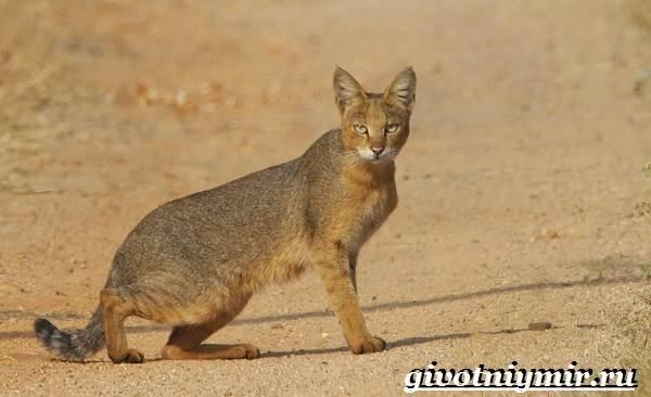 Животные-пустыни-Описания-названия-особенности-и-фото-животных-пустыни-8