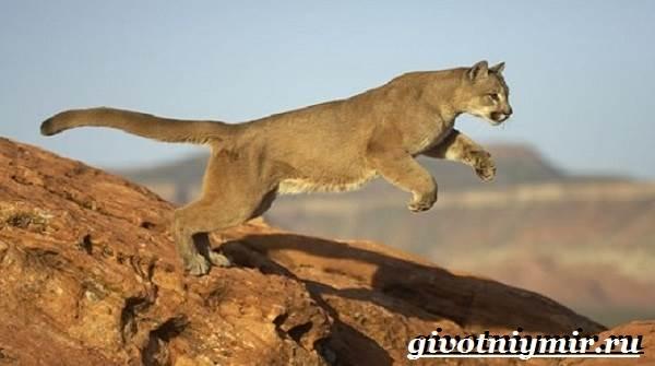 Животные-пустыни-Описания-названия-особенности-и-фото-животных-пустыни-9