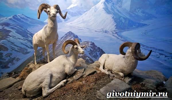 Животные-Северной-Америки-Названия-описания-и-фото-животных-Северной-Америки-1