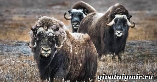 Животные-Северной-Америки-Названия-описания-и-фото-животных-Северной-Америки-13