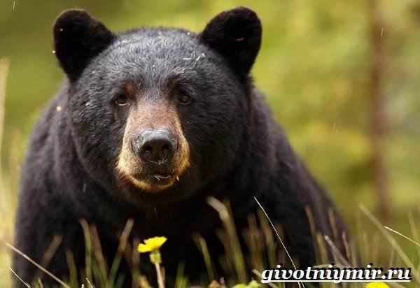 Животные-Северной-Америки-Названия-описания-и-фото-животных-Северной-Америки-14