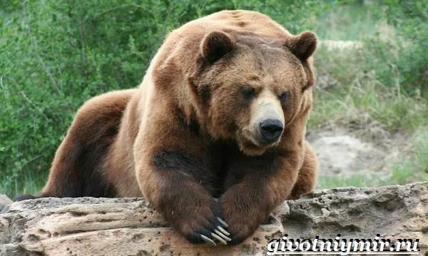 Животные-Северной-Америки-Названия-описания-и-фото-животных-Северной-Америки-16