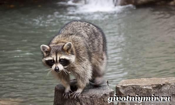Животные-Северной-Америки-Названия-описания-и-фото-животных-Северной-Америки-18