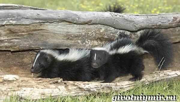 Животные-Северной-Америки-Названия-описания-и-фото-животных-Северной-Америки-20