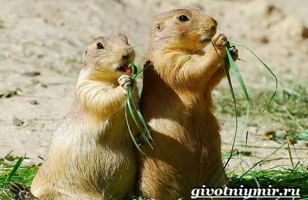 Животные-Северной-Америки-Названия-описания-и-фото-животных-Северной-Америки-21
