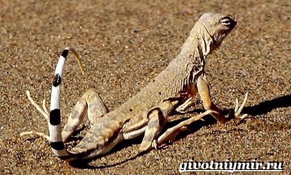 Животные-Северной-Америки-Названия-описания-и-фото-животных-Северной-Америки-25