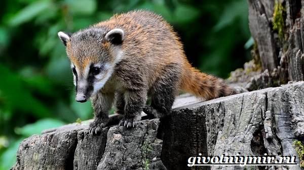 Животные-Северной-Америки-Названия-описания-и-фото-животных-Северной-Америки-3