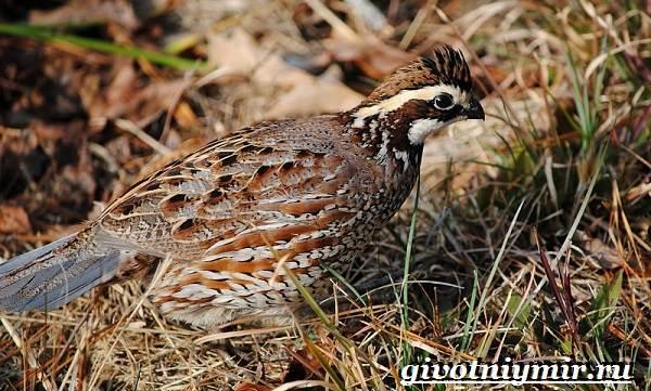 Животные-Северной-Америки-Названия-описания-и-фото-животных-Северной-Америки-31