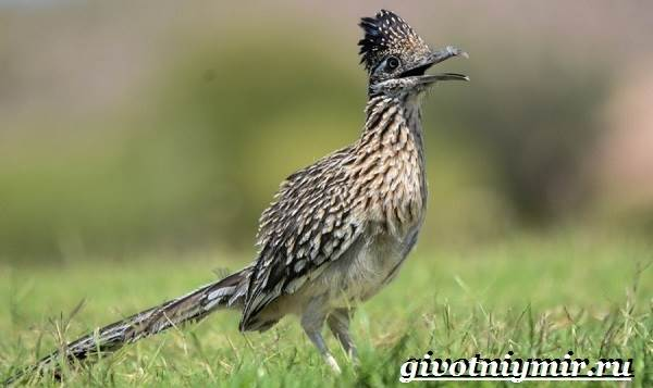 Животные-Северной-Америки-Названия-описания-и-фото-животных-Северной-Америки-37