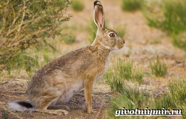 Животные-Северной-Америки-Названия-описания-и-фото-животных-Северной-Америки-7
