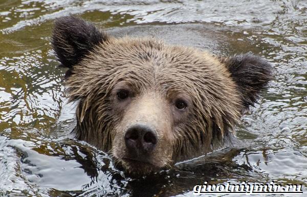 Животные-Северной-Америки-Названия-описания-и-фото-животных-Северной-Америки