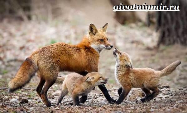 Животные-Сибири-Описание-и-особенности-животных-Сибири-14