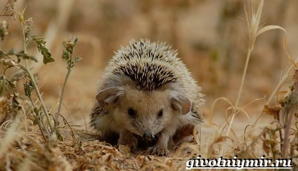 Животные-Сибири-Описание-и-особенности-животных-Сибири-17