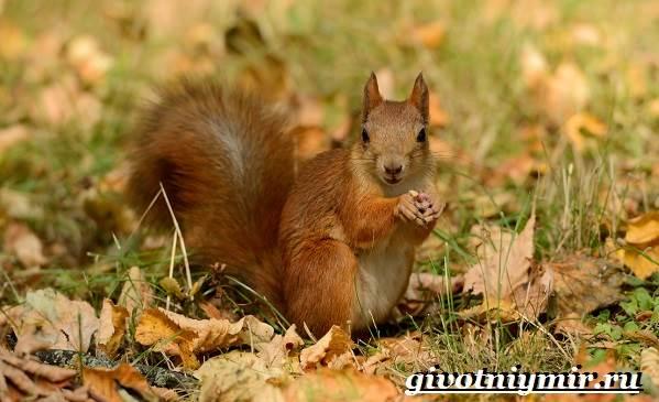 Животные-Сибири-Описание-и-особенности-животных-Сибири-2