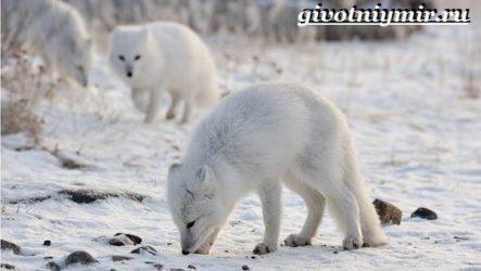 Животные Сибири. Описание и особенности животных Сибири
