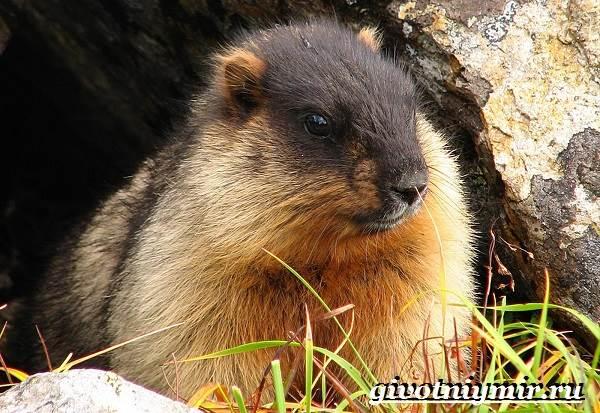 Животные-Сибири-Описание-и-особенности-животных-Сибири-6