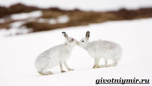 Животные-Сибири-Описание-и-особенности-животных-Сибири-8