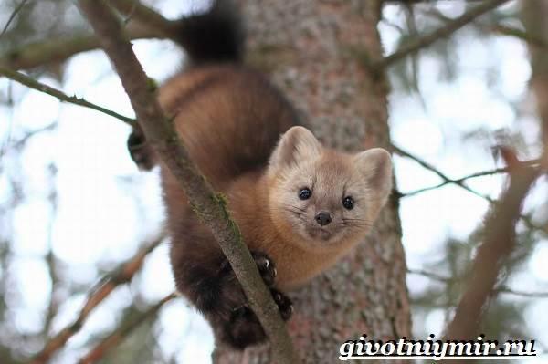 Животные-тайги-Описание-и-особенности-животных-тайги-10