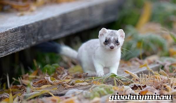 Животные-тайги-Описание-и-особенности-животных-тайги-12