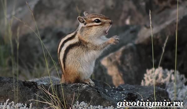 Животные-тайги-Описание-и-особенности-животных-тайги-13