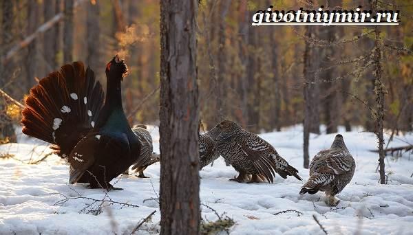 Животные-тайги-Описание-и-особенности-животных-тайги-15