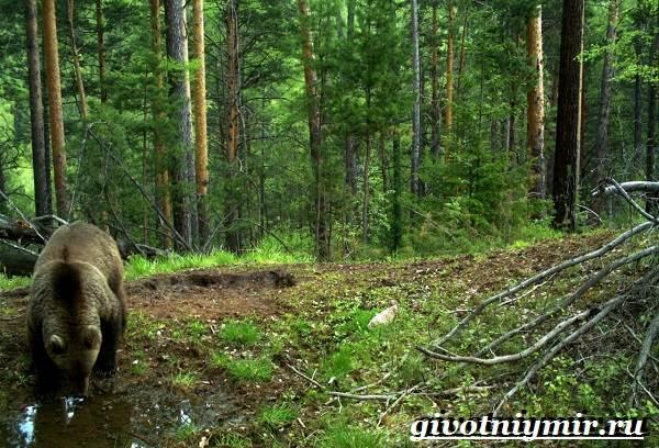 Животные-тайги-Описание-и-особенности-животных-тайги-2