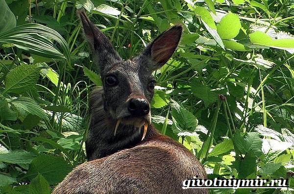 Животные-тайги-Описание-и-особенности-животных-тайги-26