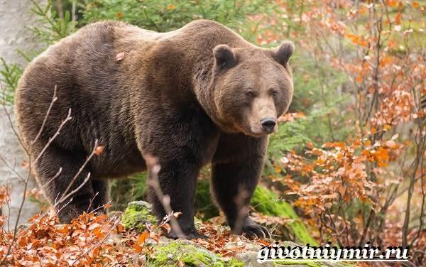 Животные-тайги-Описание-и-особенности-животных-тайги-3