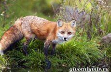 Животные тайги. Описание и особенности животных тайги